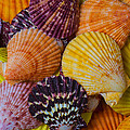 Colorful Shells by Garry Gay