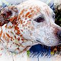 Colorful Spots by Joyce Baldassarre