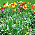 Colorful Spring by Aimee L Maher ALM GALLERY