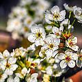Colorful Spring by Sennie Pierson