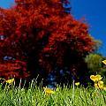 Colorful Spring by Sonya Kanelstrand