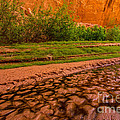 Colorful Streambed - Coyote Gulch - Utah by Gary Whitton