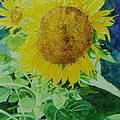 Colorful Sunflowers Watercolor Original Sunflower Art by K Joann Russell