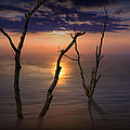 Colorful Sunset Seascape With Tree Trunks by Randall Nyhof
