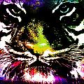 Colorful Tiger Abstract Grunge Face by Dori Marie Art By Design