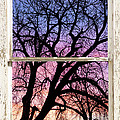 Colorful Tree White Farm House Window Portrait View by James BO Insogna
