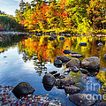Colorful Trees Along The Swift River by George Oze