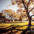 Colorful Trees Of Long Beach In The Autumn by Sviatlana Kandybovich
