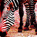 Colorful Zebra - Buy Black And White Stripes Art by Sharon Cummings