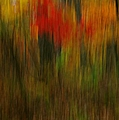 Coloring The Woods by Randy Pollard
