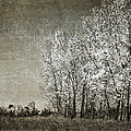 Colorless Fall by Jeff Swanson