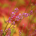 Colors I Love by Lori Tambakis