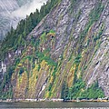 Colors Of Alaska - Misty Fjords by Natalie Rotman Cote