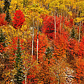 Colors Of Autumn by Greg Norrell