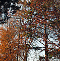 Colors Of Autumn by Tikvah's Hope