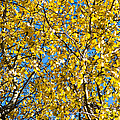 Colors Of Autumn - Yellow - Featured 3 by Alexander Senin