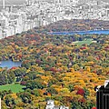 Colors Of Central Park by Dan Sproul
