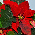 Colors Of Christmas by Rita Mueller