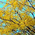 Colors Of Fall 1 by Deborah  Crew-Johnson