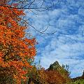 Colors Of Fall 2 by Gene Cyr