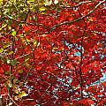 Colors Of Fall 3 by Gene Cyr