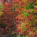 Colors Of Fall 4 by Earl Johnson