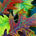 Colors Of Fall by Greg Thiemeyer