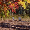 Colors Of Fall by Jane Harris