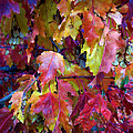 Colors Of Fall by Janice Westerberg