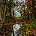 Colors Of Fall by Kristi Swift