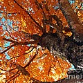 Colors Of Fall  by Laurie Wilcox