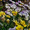 Colors Of Flower  by Stefan Pettersson