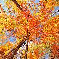 Colors Of Leaves Yellows Oranges 2884 by Marie Fierek