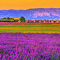 Colors Of Provence by Midori Chan