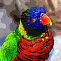 Colors Of The Lorikeet by David Lee Thompson