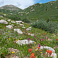 Colors Of The Rainbow - Colorado Mountain Summer by Cascade Colors