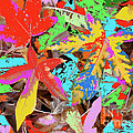 Coloured Leaves By M.l.d. Moerings  2009 by Marion Moerings