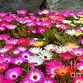 Colourful Flowers by Beth Grant