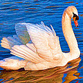 Colourful Swan by Roy Pedersen