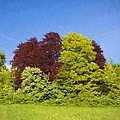 Colourful Trees by Roy Pedersen
