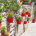 Colourful Flower Pots by Roy Pedersen