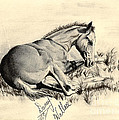 Colt Laying In Grass by D Wallace