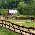 Colts On A Farm by Jill Lang