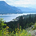 Columbia Lake Which Is Source Of The Columbia River-bc  by Ruth Hager