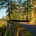 Columbia River Gorge Highway by Brian Jannsen