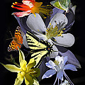 Columbine And Butterfly Collage by David Salter