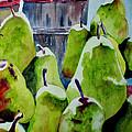 Columbus Pears by Nicole Curreri