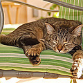 Comfy Kitty by Aimee L Maher ALM GALLERY