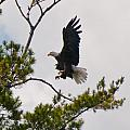 Coming In For A Landing by Brenda Jacobs