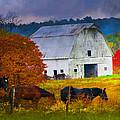 Coming To The Barn by Randall Branham